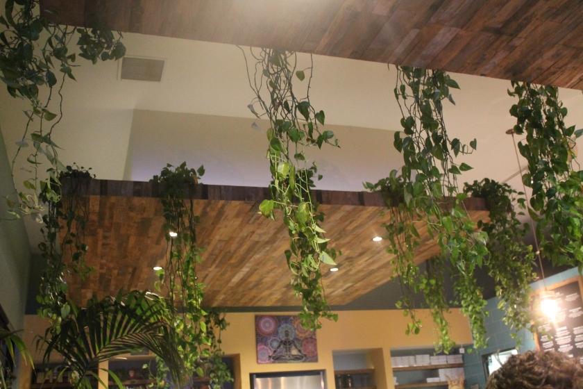 eve plants